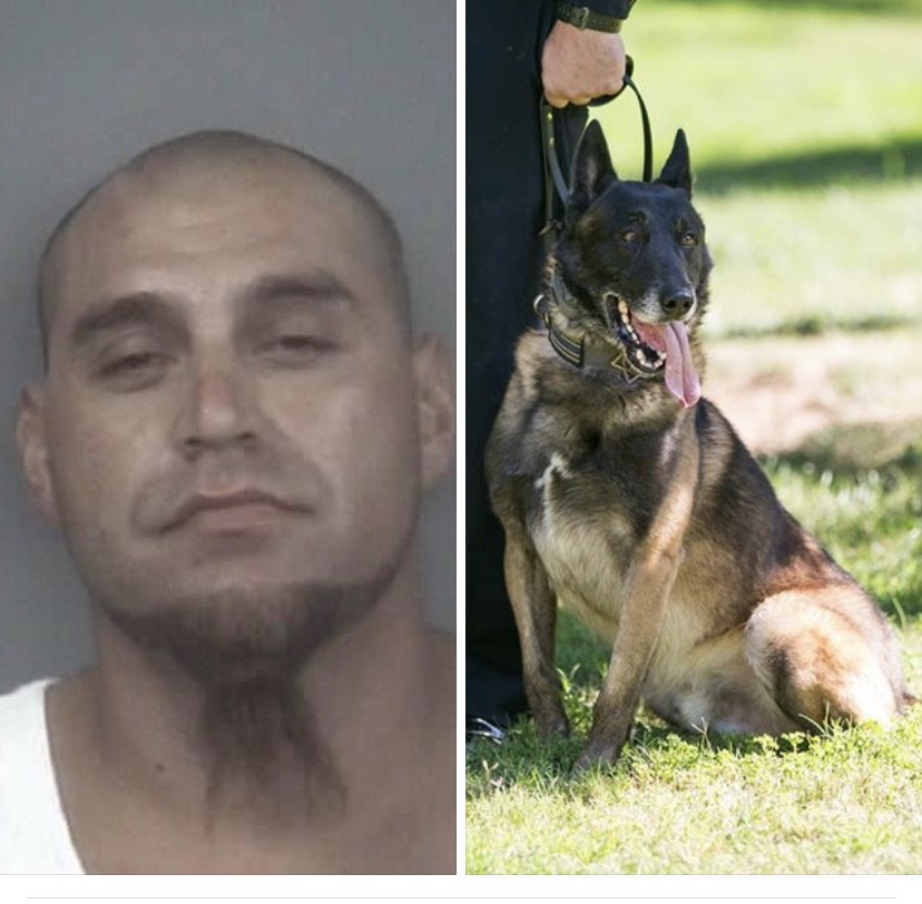Ricardo Castrejon mugshot pictured and K9 Aron pictured. Photo provided by Chico PD. Photo credit: Angelina Mendez