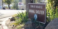 Local animal shelters get help after Camp Fire