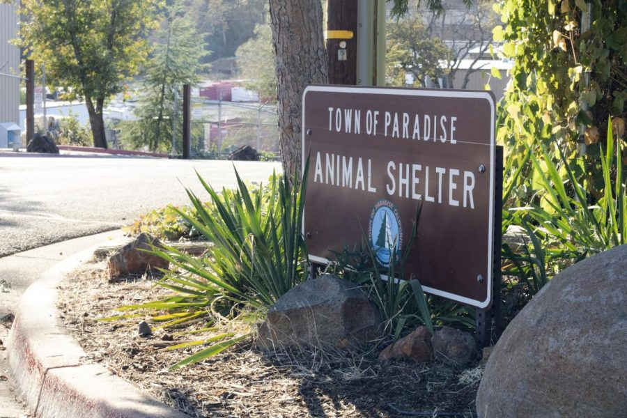 The Paradise Animal Shelter still primarily holds Camp Fire pets a year later. Photo credit: Hana Beaty