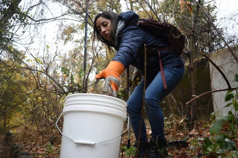 AS Sustainability hosts final fall creek cleanup