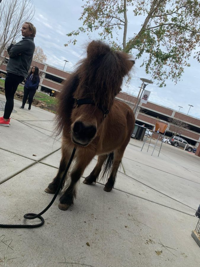 Friendly pony posing for a picture in front of the WREC. Photo credit: Joel Peterson