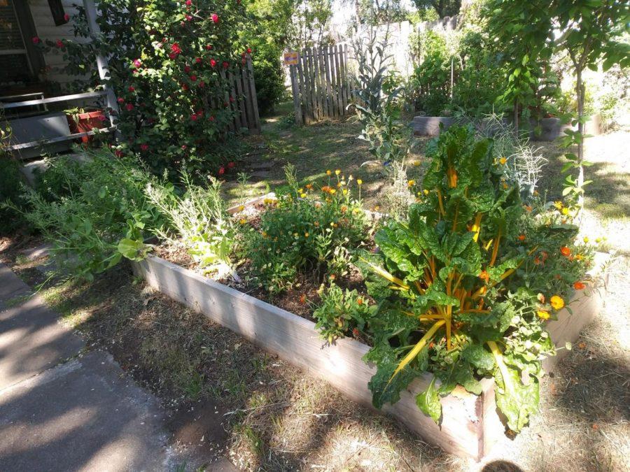 Raised garden beds of the Vecino Victory Garden.