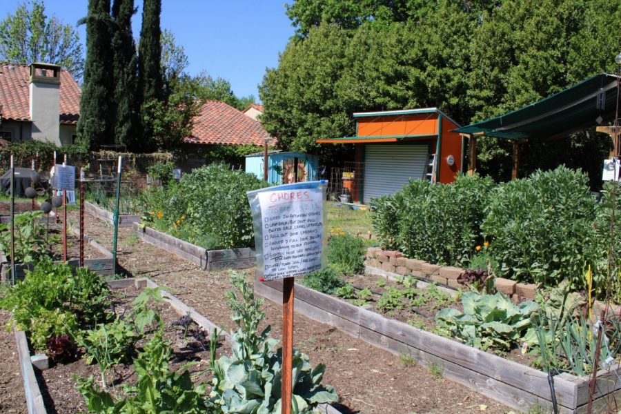 A list of gardening chores helps to make sure the garden beds are well maintained at the Kentfield Garden.