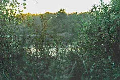 Somewhere along the Sacramento River