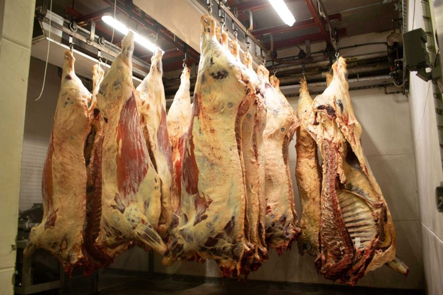 Freshly butchered beef hang in the meat locker to cure until processing time, taken on Oct. 15, 2021.