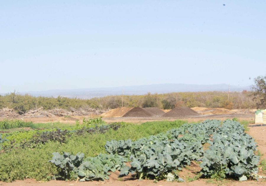 A variety of crop from the Organic Vegetable Project and compost piles in the back, taken on Oct. 15, 2021.