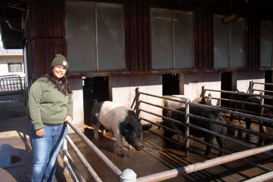 Annelise Perez poses with a grove of sows at the University Farms Swine Unit on Oct. 22, 2021.